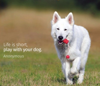 Life is short...Play with your Dog